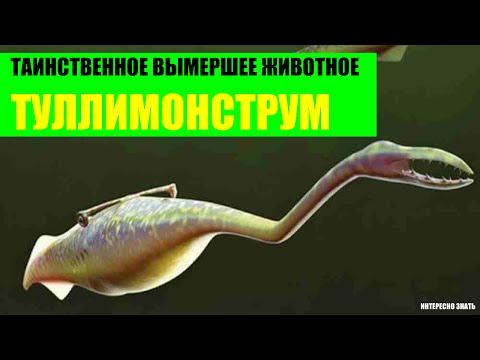 Таинственное вымершее животное - туллимонструм