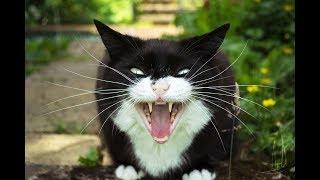 Наглый кот, сосиски, перелом ноги. Рассказ мужчины, желавшего проучить кота!