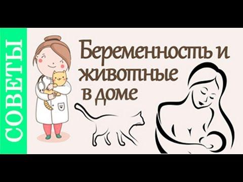 Беременность и кошки. Советы ветеринара