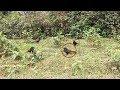 Keren Pikat Burung Liar Dengan Cara Yang Sangat Luar Biasa  Mp3 - Mp4 Download