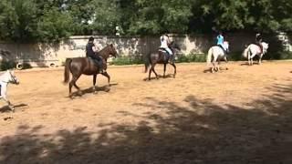 Дети и лошади. Из опыта конно-спортивного детского клуба в Отрадном(Детский конно-спортивный комплекс
