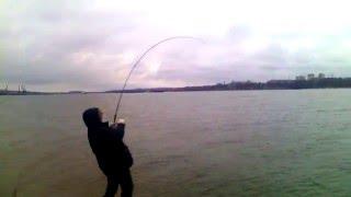 Рибалка. Ось це риба...