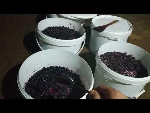 Как сделать розовое вино в домашних условиях