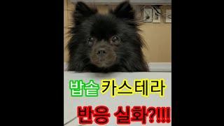 [시끄럽개TV]강아지 …