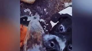 Собака эпично пьёт воду