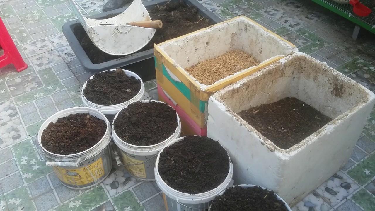 Chia sẻ cách trộn đất trồng Rau Cải , Mướp Bầu Bí , đơn giản mà hiệu quả  | Khoa Hien 298