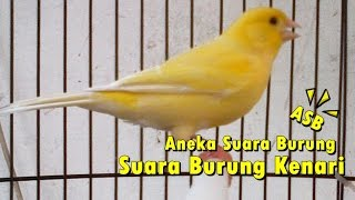 Aneka Suara Burung - Suara Burung Kenari