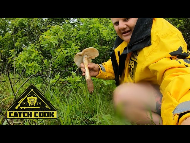 Foraging for the amakhowe mushroom, a wild growing delicasy | catch cook | KZN
