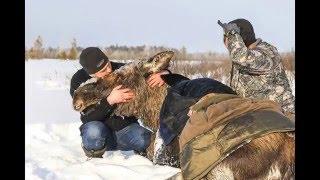 Русские люди спасают животных
