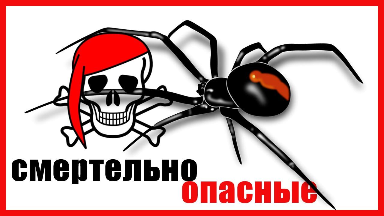 Смертельно опасные  пауки и насекомые России