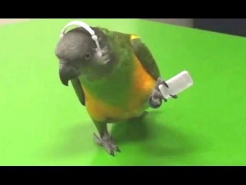 Parrots Dancing – A Funny Parrot Videos Compilation || NEW HD
