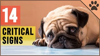CRITICAL! 14 Signs That Your Dog Is Begging For Help