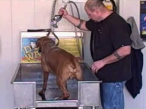 The dog wash at the carwash auto spa on harvester rd st peters mo the dog wash at the carwash auto spa on harvester rd st peters mo 63376 solutioingenieria Gallery