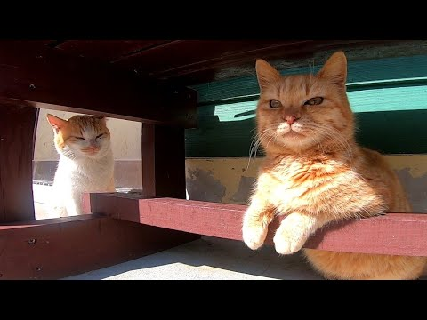 仲良し野良猫達かと思ったらいつの間にか言い争いに。