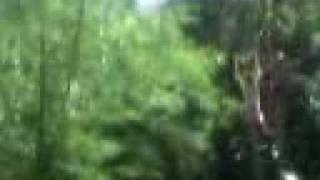 Download Video tarsan x' MP3 3GP MP4