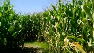Corn Maze-n It!!