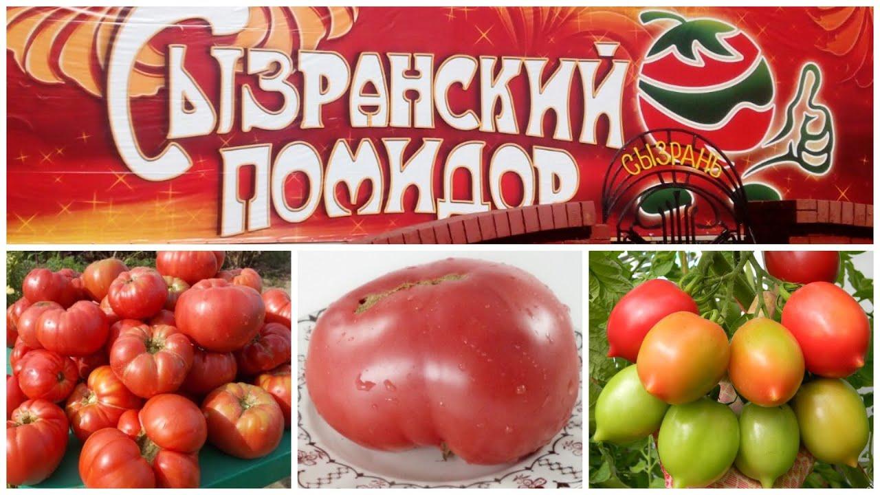 Легендарные Сызранские томаты. Обновление коллекции - 2022