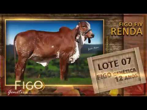 LOTE 07 - FIGO FIV RENDA - HCFG 1493