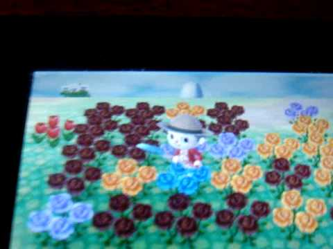 How to make blue roses in animal crossing new leaf youtube for How are blue roses made