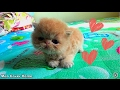 Kittens 2 Weeks So Cute | Funny Newborn Kittens 2017 | Best Ever Moment Cat 2017