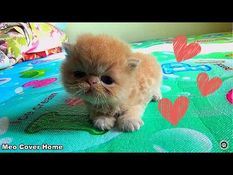 Kittens 2 Weeks So Cute | Funny Newborn Kittens 2017 | Best Ever Moment Cat 2017