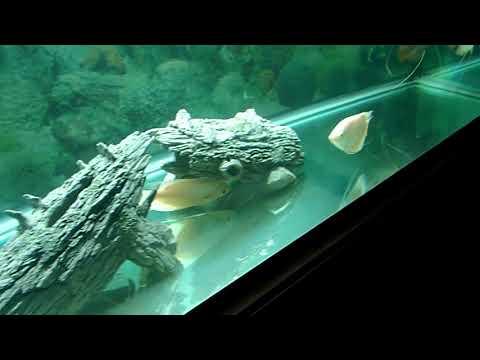 Freshwater Tropical Fish