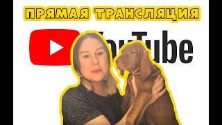 Прямая трансляция: знакомство с нашей собакой, обучение на физиотерапевта, стипендия и зарплата😊