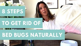 8 Steps To Get Rid of Bed Bugs - Naturally
