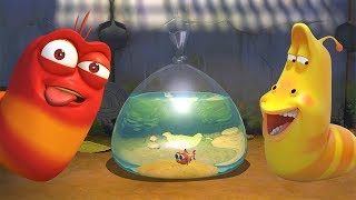 LARVA - FISH OUT OF WATER | Cartoon Movie | Cartoons | Comics | Larva Cartoon | LARVA Official