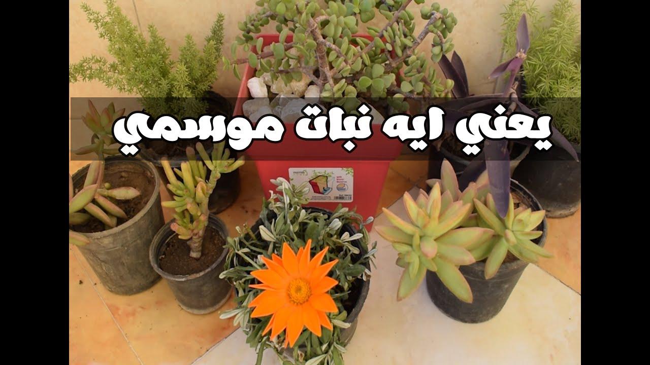 اعرف الفرق بين النباتات الموسمية و الدائمة في اقل من دقيقتين Youtube