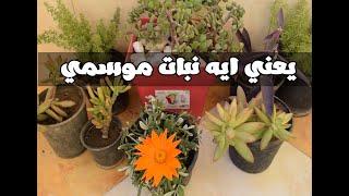 !! اعرف الفرق بين النباتات الموسمية و الدائمة في اقل من دقيقتين