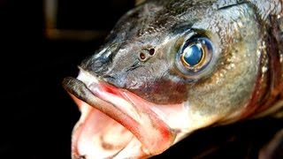 KILLER FISH ROASTED - Grilled Seabass - perfect barbecue Fish Recipe - standing fish roast