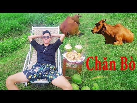 PHD | Chăn Bò Phong Cách Dubai | Cow