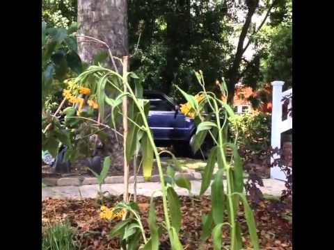 Monarchs Visit NFLT Garden!