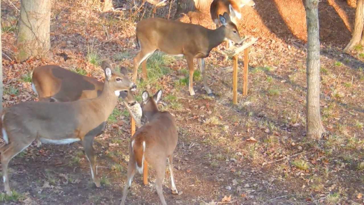 backyard deer feeder