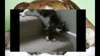 Смотреть Смешные Кошки Забавно!