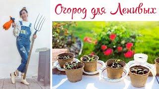 Огород для Ленивых. Рассада Букетная Посадка в Грунт. Как получить Большой Урожай Овощей, Цветов.