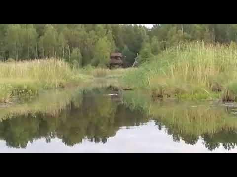Бобер плывет сняли после рыбалки на базе отдыха Paakkola на Вуоксе
