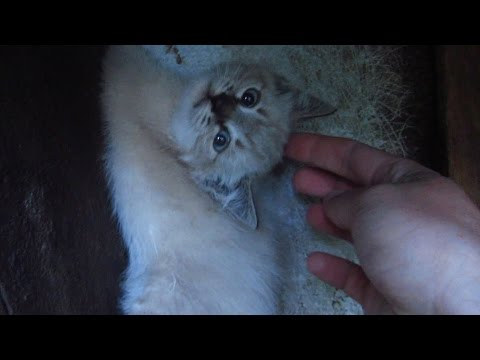 Kitten Rescue on my street Paw stuck