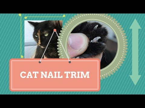 how to trim your cat's nails: a few tips!