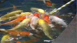 Рыбки сосут соску o_0 (Fish suck the nipple o_0)