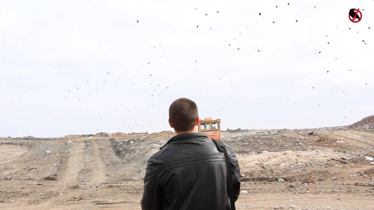 Звуки отпугивающие птиц скачать
