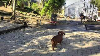 Outside Dog Yard Cam 03-22-2018 08:00:32 - 09:00:33