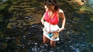 СУПЕР РЫБАЛКА. Чёрный карп в тайланде. Ловим руками - Видео!(Это природная заводь в Таиланде. Она находится у водопада в заповедной зоне. На видео НЕ период нереста..., 2014-12-01T23:35:09.000Z)