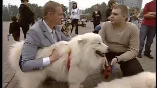 ТК Донбасс - Ездовые собаки: аляскинские маламуты