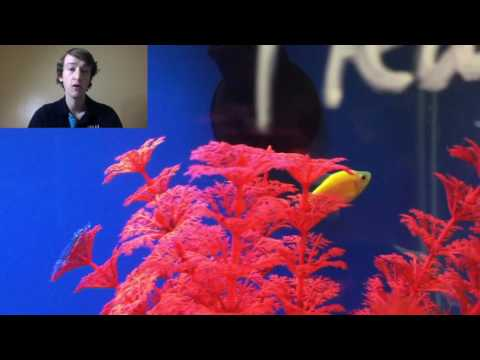 Glofish Tetra Information And Care