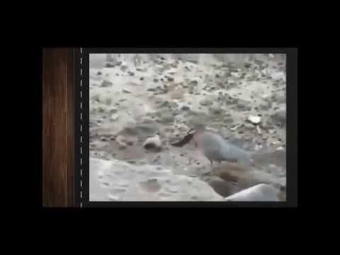 Красивые и прикольные Птицы - Приколы