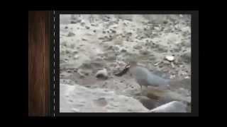 Умные птицы видео. Смешные птицы