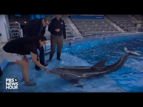 After life in captivity, dolphins to undergo sea change