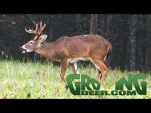 Deer Hunting  | Post Rut Strategies | Lessons From The Hunt (#471) @GrowingDeer.tv